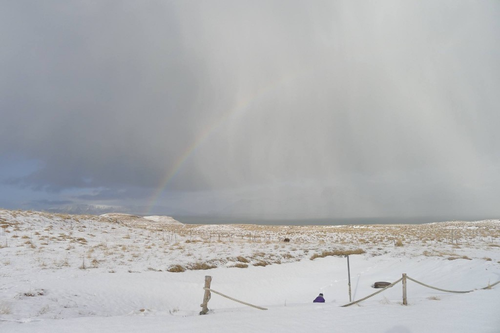 Icelandic Rainbow on Videy Island